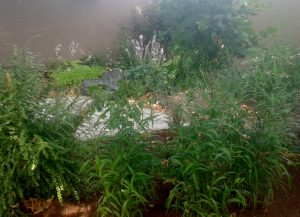 garden long shot